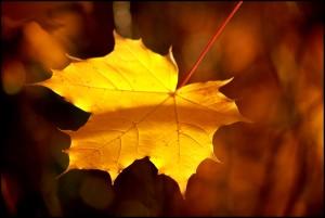 """『葉っぱのフレディ』""""The Fall of Freddie the Leaf"""" はいいお話だけど長くて英語で聞いていられないあなたへ"""