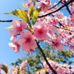 お彼岸と桜と母と長女と。