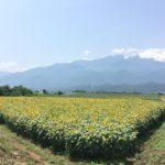 八ヶ岳 令和元年夏